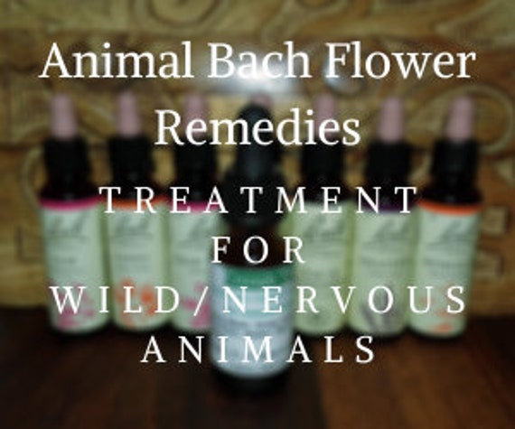 Bach Flower Remedies for Treating Wild/Nervous Animals