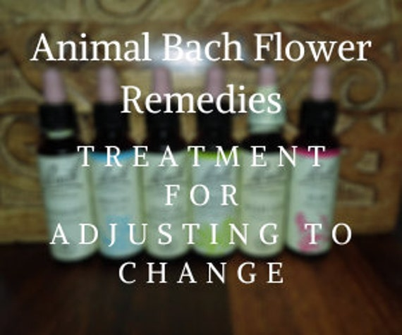 Animal Bach Flower Remedies for Adjusting to Change