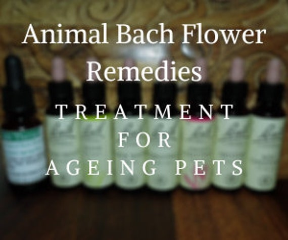 Animal Bach Flower Remedies for Ageing Pets, Bach Original Flower Remedies, Bach Flower Essences