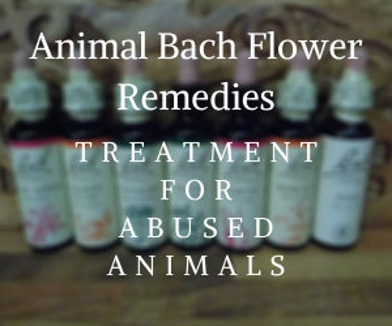 Bach Flower Remedy for Abused Animals