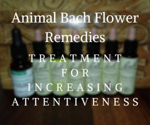 Animal Bach Flower Remedies for Increasing Attentiveness, Bach Original Flower Remedies, Bach Flower Essences