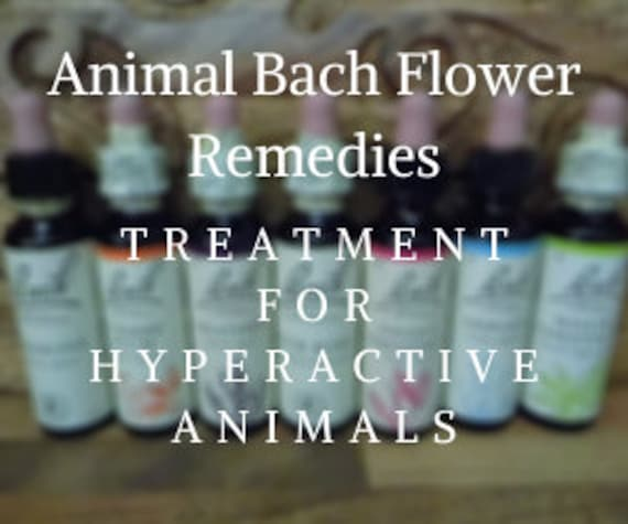 Animal Bach Flower Remedies for  Hyperactivity