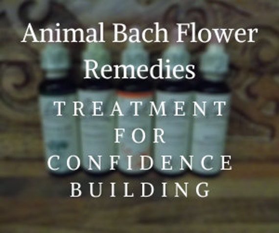 Animal Bach Flower Remedies for Confidence Building