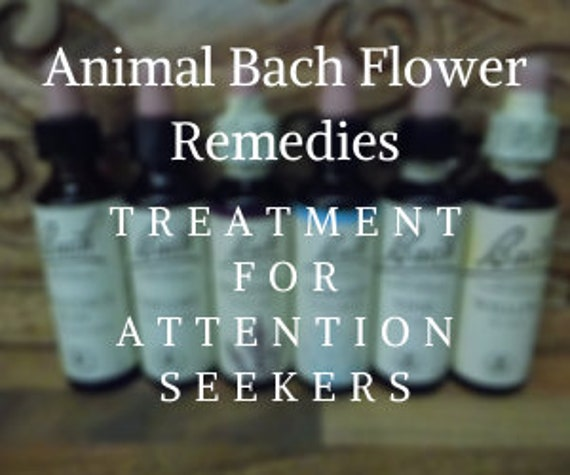 Animal Bach Flower Remedy for Attention Seekers, Bach Original Flower Remedies, Bach Flower Essences