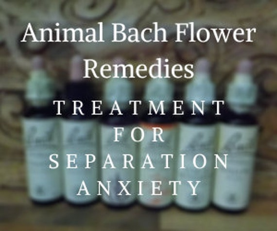Animal Bach Flower Remedy for Separation Anxiety, Bach Original Flower Remedies, Bach Flower Essences