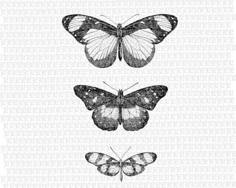 Butterflies Digital Collage Sheet Antique Illustration image 0