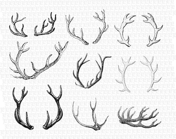 photograph about Printable Deer Antlers identify Printable Deer Antlers Common Graphics Electronic Collage Sheet Fast Down load 2429