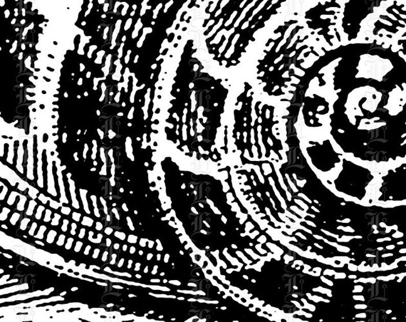 Snail Mollusk Printable Graphic Digital Clip Art Instant Download Vintage Clip Art  2373