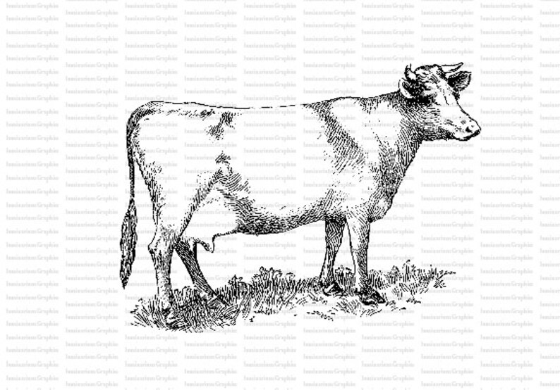 image regarding Printable Cow Pictures titled Printable Cow Clip Artwork Electronic Cow Image Higher Good quality Cow Picture Individual and Industrial Employ the service of MC1-37