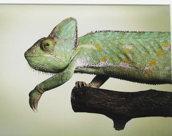 chameleon mounted photograph by Victoria Andrews - FREE POSTAGE