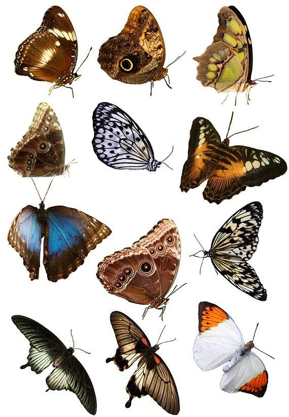Papillons et papillons - céramique émail Stickers autocollant - sticker thermocollant - décalque fusion de verre ~ toboggan sticker - 89283