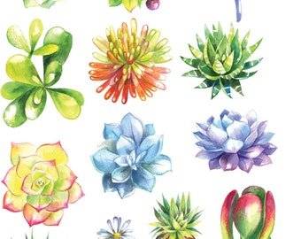 Watercolor  Succulents 1 - Cactus - Ceramic Decals- Enamel Decal - Fusible Decal - Glass Fusing Decal ~ Waterslide Decal - 86086