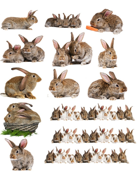or Glass Fusing Decals Glass Decal Choose Either Ceramic Vintage Animal Rabbits Ceramic Decal 3 Different Size Sheet to Choose from 93755 Enamel Decal Waterslide Decal Enamel Images