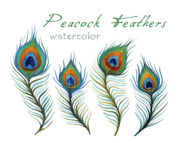 Feather Clip Art Peacock