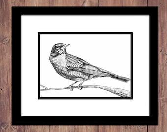 Robin Bird Art Print from Original Pen and Ink Drawing, Bird Drawing, Woodland Decor