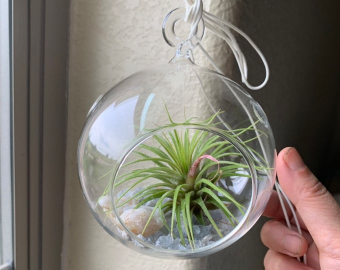 Global Glass Terrarium Sets with blue celestite crystals or mixed crystals, air plant, agate geode piece- perfect gift for all occasions