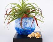 Succulent Planter Hand Painted Ceramic