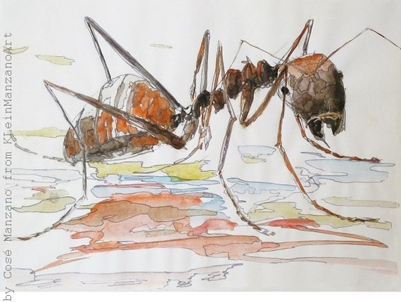 Water-color ant: A3 Digital print of water-color painting in limited edition of 5, original art by Cosé Manzano