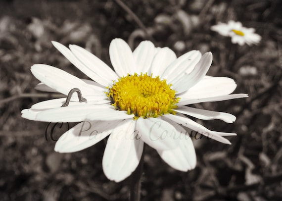 Blumen Kunst Blume Schwarz Weiss Gelb Foto Pop Der Farbe Etsy