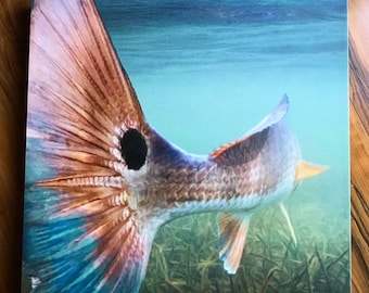 Bull Redfish painting: redfish art on canvas, red drum, redfish painting, redfish tail, tailing redfish, channel bass, spottail bass, red
