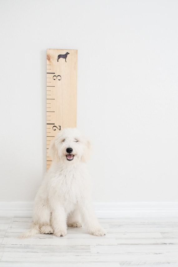 Growth Chart For Dogs Measure Your Pup Puppy Birthday Pet Etsy