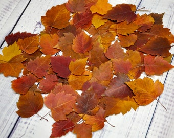 50 Hawthorn Leaves Pressed Leaves Pressed Fall Leaves Fall Wedding  Thanksgiving Leaves Fall Decorations Leaves For Crafts Home Decor