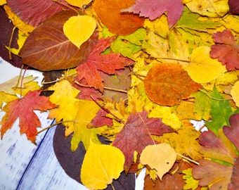 autumn leaves etsy