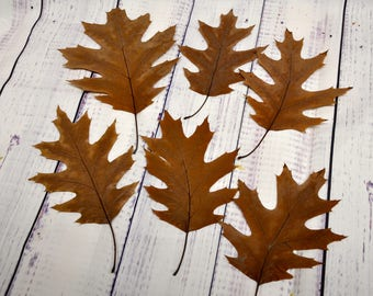Pressed Leaves Pressed Fall Leaves 10 Oak Leaves Fall Wedding Thanksgiving Leaves Fall Decorations Leaves for Crafts