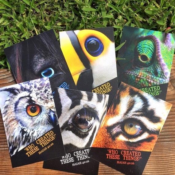 Creation / Animal Eyes -Postcards (Set of 6)