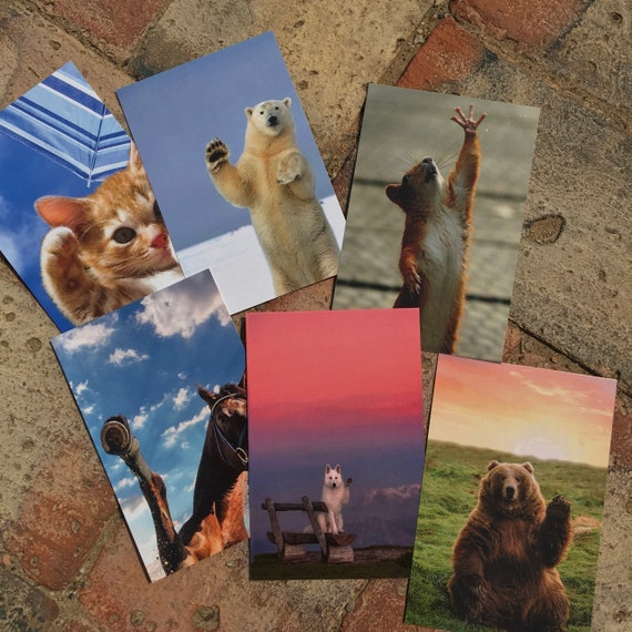 Waving Hello Animals Postcards (Set of 6)