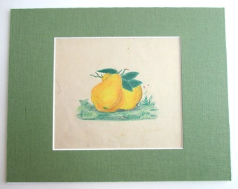 Original Antique Pear Drawing in 11x14 Archival Mat.