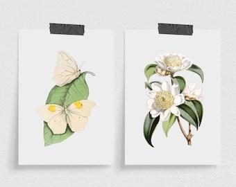 Set of 2 Mini Botanical Art Prints
