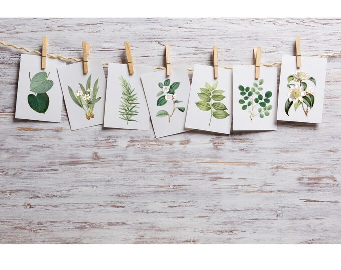 4 x 6 inch Printed Botanical Cards | Journal Cards | Mini Art Prints | Leaves and Flowers