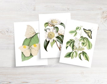 Set of 6 Butterfly and Floral Notecards