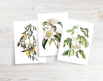 Set of 6 Bird, Butterfly and Floral Notecards