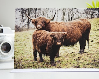 Highland Cows Photo Greeting Cards   Nature Photography