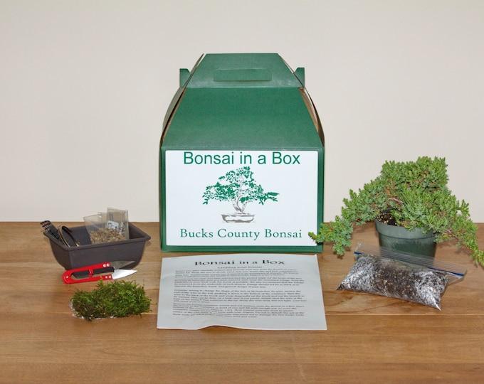 Bonsai in a Box, Make Your Own  Bonsai Kit