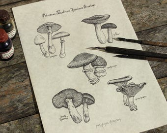 Toadstools PRINT, Apothecary art, Poisonous Mushrooms ink Drawing, Cottagecore print, antiquarian Victorian steampunk botanical illustration