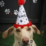 Red Party Hat for Dog - Paw Print Party Hats - Dog Party Hats - Dog Birthday Hat - Pet Birthday - Party Hats for Dog - Dog Party Supplies