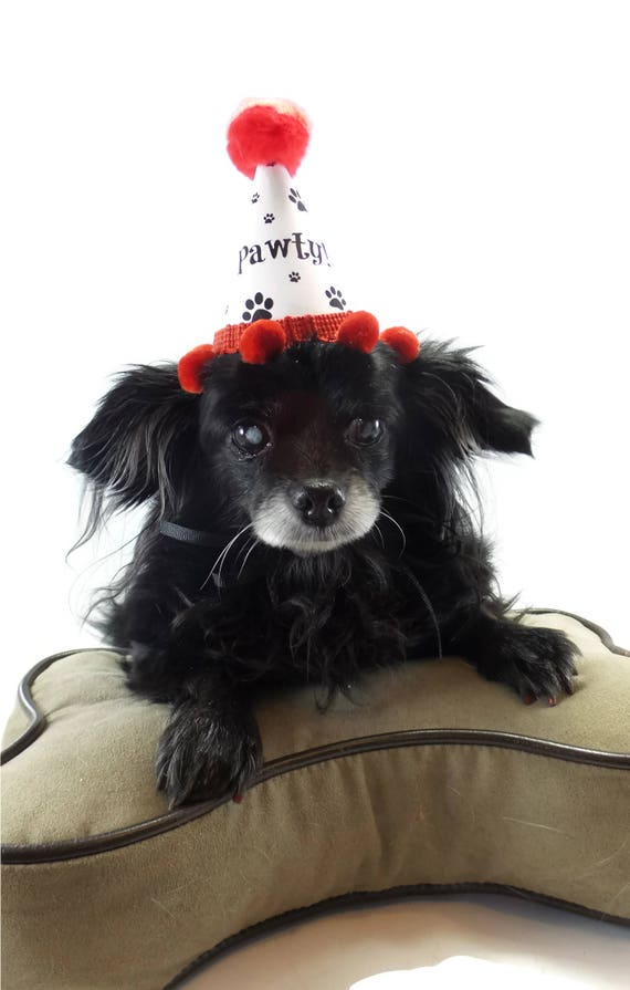 Red Party Hat For Dog Paw Print Hats