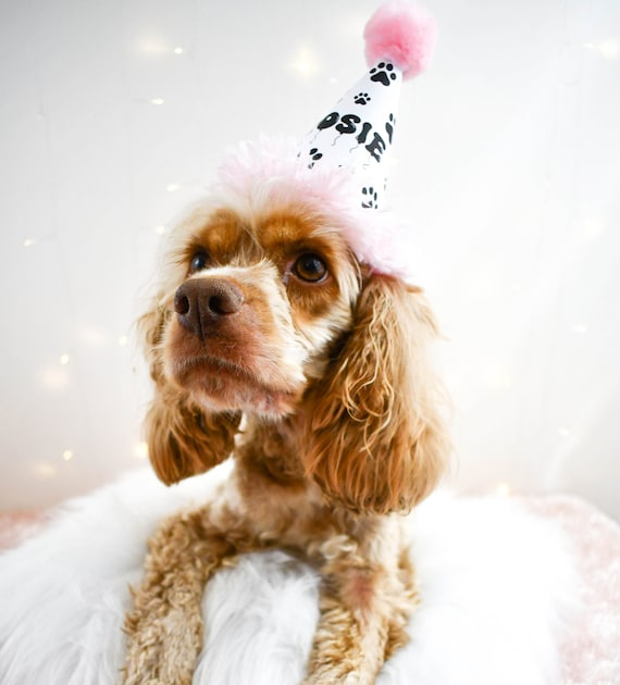 Dog Birthday Hats  Personalized Pet Hats  Hand Made Hats For Your Pets