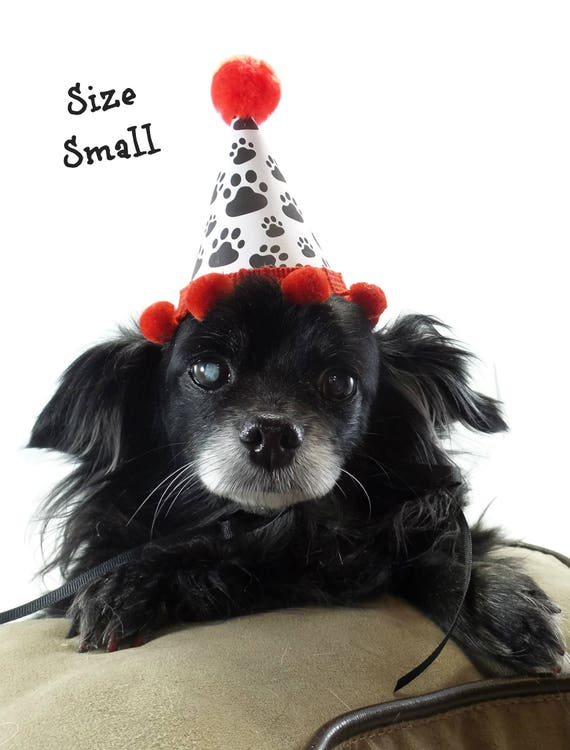 Party Hat For Dog Puppy Birthday