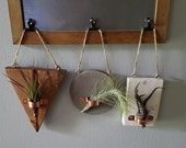 Hanging Air Plant Holders, Air Plant Organizers, Plant Holders, Air Plants, Indoor Holder, Hanging Holder, Wooden Holder