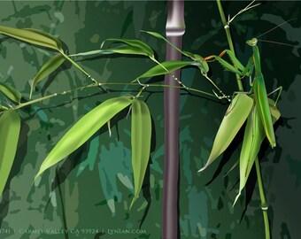 Archival Fine Art Print | Black Bamboo + Praying Mantis | 19 x 13
