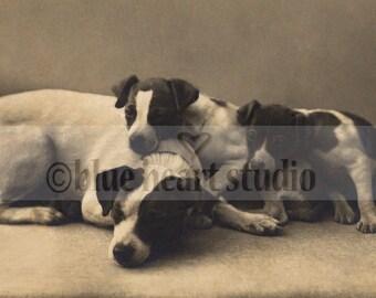 Antique Dog, Puppy, puppies Postcard art / Sepia toned Digital Download Printable Instant / Paper Craft Scrapbook Altered Art / Victorian
