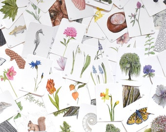 60 Postcards Mega-Set, Cards with Plants, Animals and Structures, Stock Sale, Illustrations in Watercolor, Christine Wiegelmann, SALE