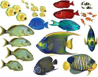 Fish Colourful stickers for card-making Peel Offs Aquatic