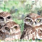 BURROWING OWLS Watercolor Bird Print, Bird Art Painting by Claudia Hafner