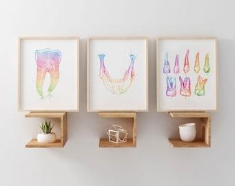 Charmant Dental Anatomy Print Set   Watercolor Dental Art   Med Student Gift    Anatomy Decor   Dental Office Decor   Dentist Gift   Orthodontist Gift