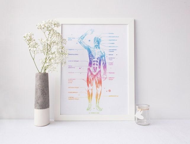 Menschliche Anatomie Muskel Anatomie Muskel-System | Etsy